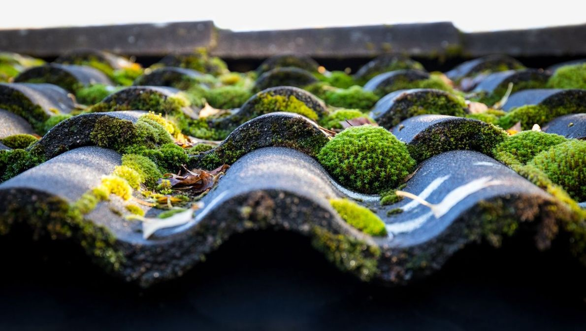 A Moss Covered Roof
